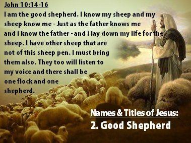 Image result for GODS SHEEP