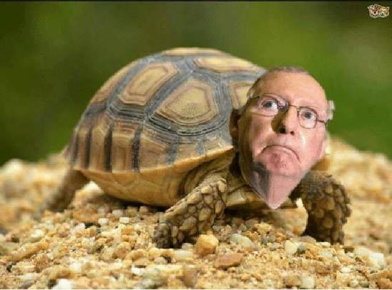 Image result for mcconnell turtle meme