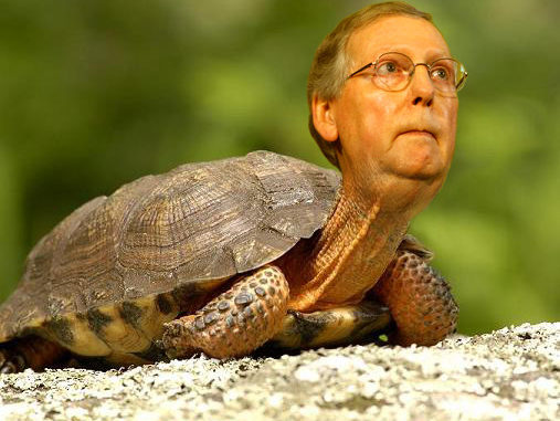 Opinion: Trump Calls Out Swamp Turtle McConnell! – The Northwest Connection