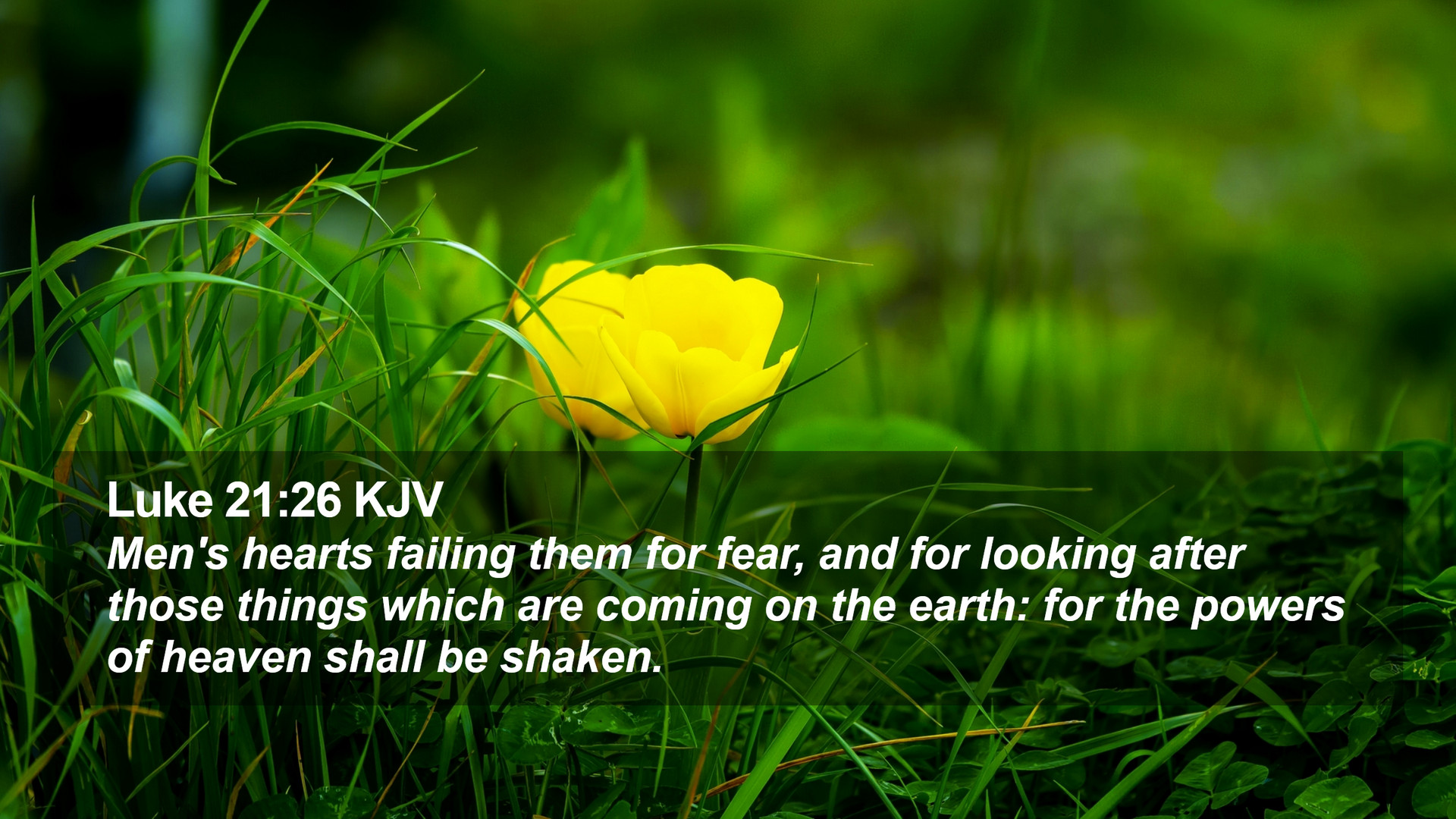 Luke 21:26 KJV Desktop Wallpaper - Men's hearts failing them for fear, and  for