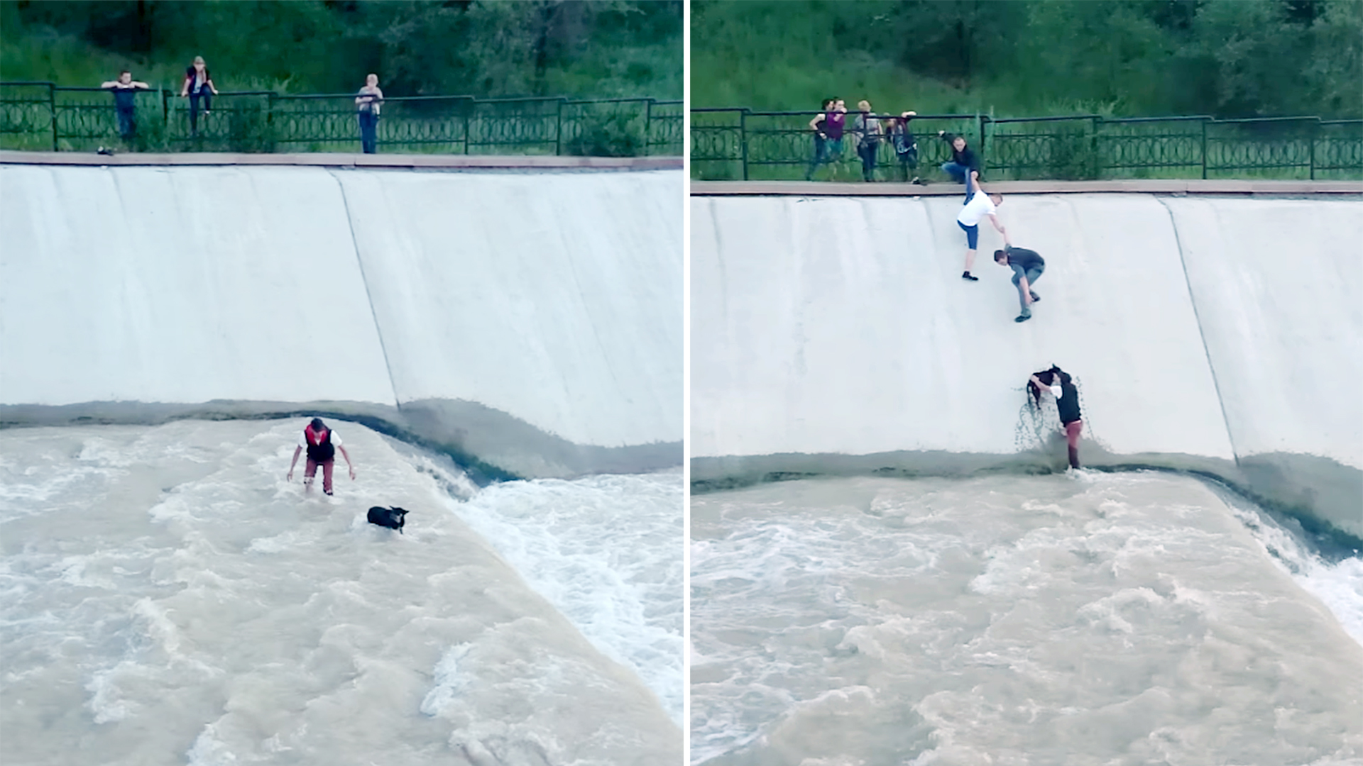 Friends form human chain to save dog stuck in reservoir