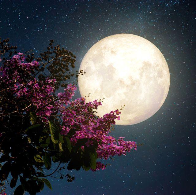 full worm moon supermoon march 2021