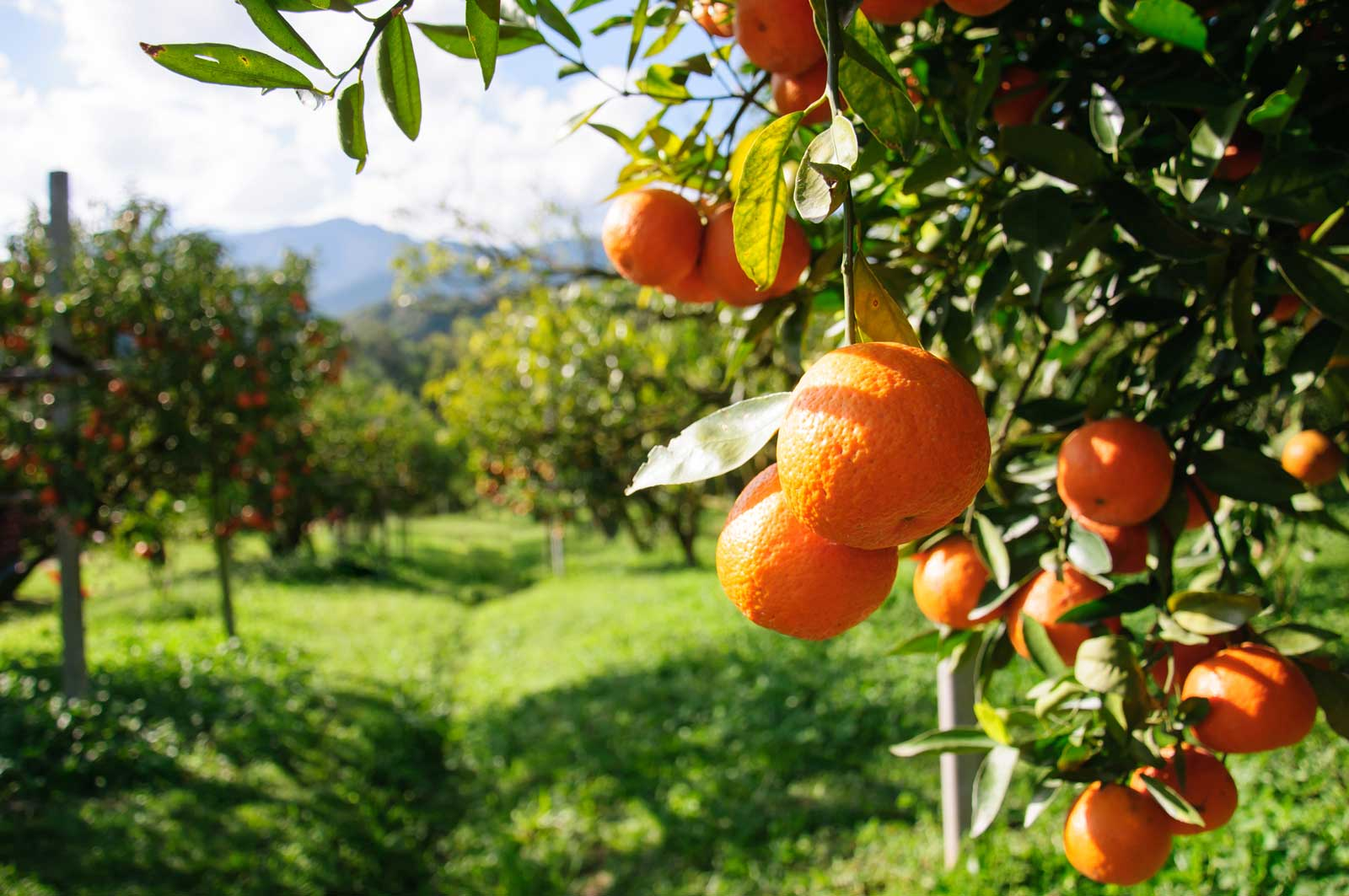 3 Tips To Keep Your Backyard Orchard Thriving | Jain Irrigation USA