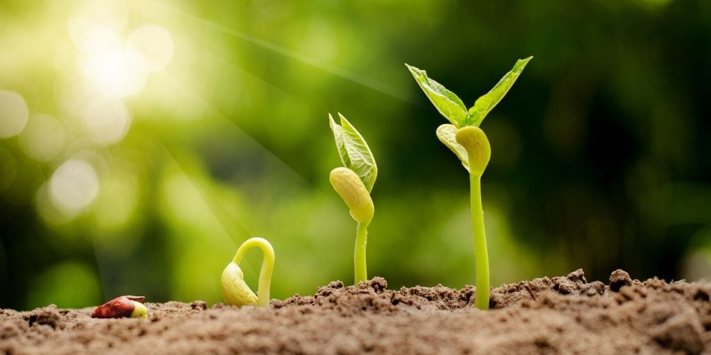 5 Methods for Germinating Seeds + Can You Plant Seeds without Germinating?  - Crate and Basket