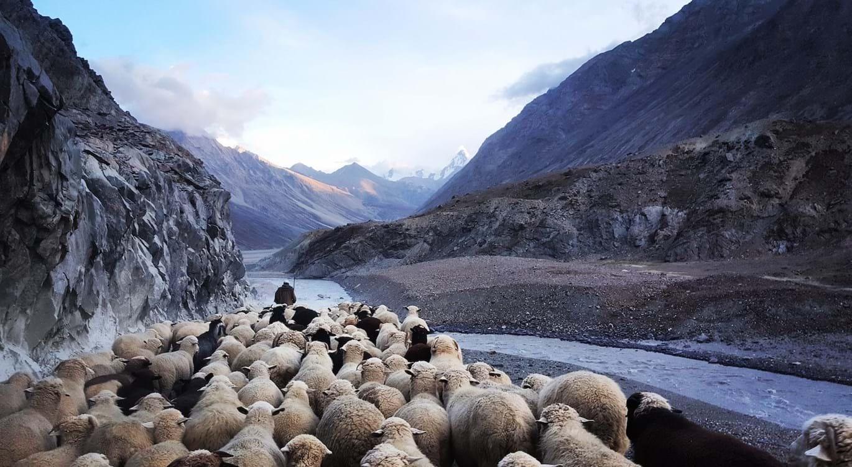 I am the Good Shepherd | Understanding the Gospel