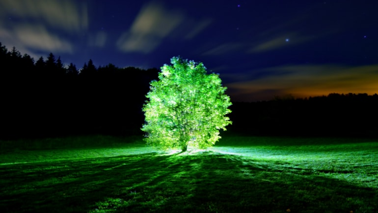 Scientists at MIT create plants that can glow in the dark: All about it -  Education Today News